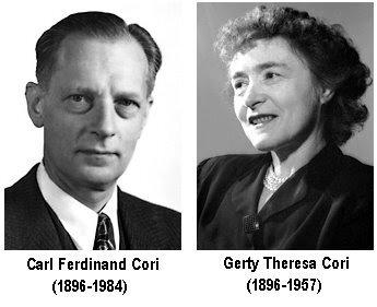 Gerty Cori, Carl Cori, y Bernardo Houssay