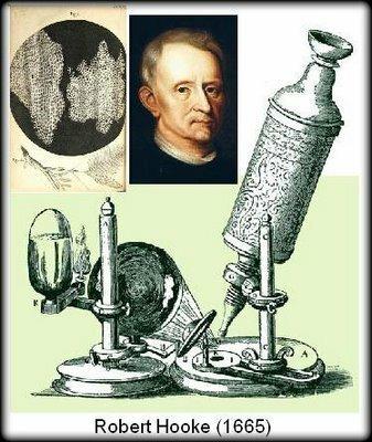 Descubrimiento de la célula por Robert Hook.