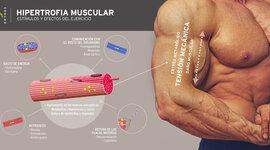 Historia del entrenamiento de fuerza para el desarrollo de la hipertrofia muscular. timeline