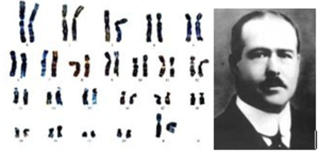 Descubrimiento de los cromosomas.