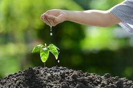La mejora del sector administrativo del ambiente 2011