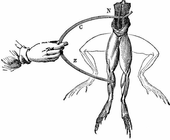 Teoría de la energía específica de los nervios