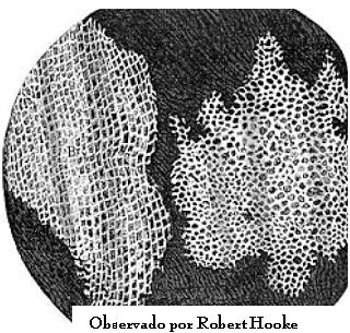 Descubrimiento de la célula