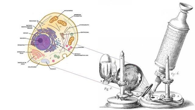 Descubrimiento de la Celula