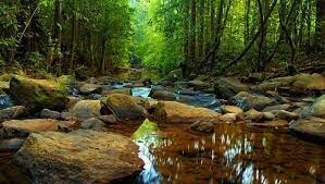 Bosque de Sinharaja en Sri Lanka