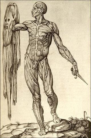 Aparece la Disección Anatómica