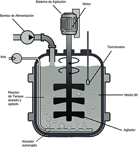Fermentadores Aeróbicos a gran escala (primer bioreactor)