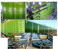 Biorreactor de algas y biocombustibles.