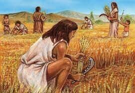 Apparition de l'agriculture
