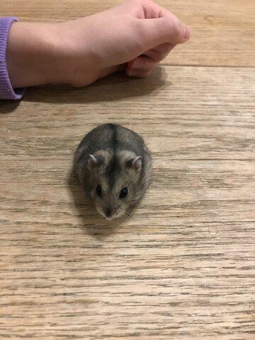 Quand j'ai eu mon hamster