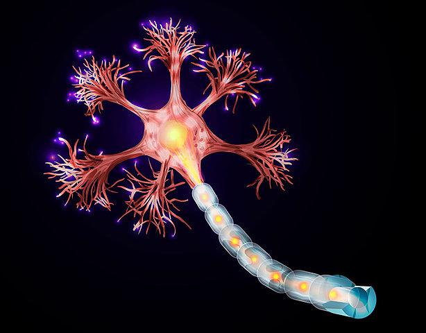 Primeras neuronas