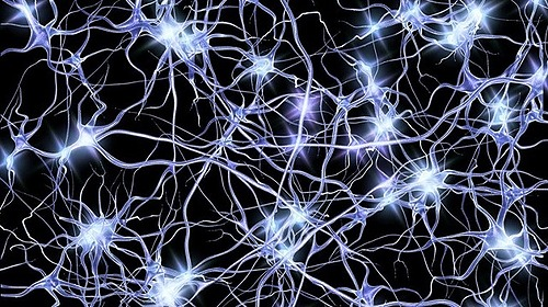 Primeras agrupaciones neuronales