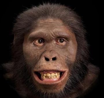 ¿Cuándo surgió el primer cerebro y de que organismos?