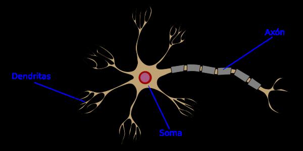 Información adicional 2.0: Red neural. 440 millones de años.