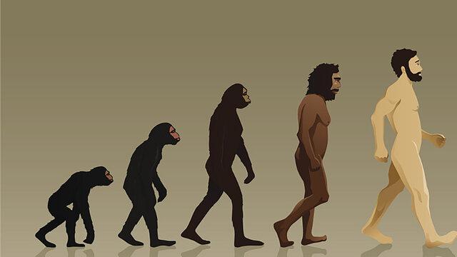 Surgimiento de los homínidos. Hace 3900 millones de años.