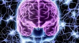 ¿de donde viene y para donde va el cerebro? timeline