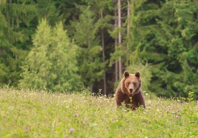 El primer cop que vaig veure un ós salvatge