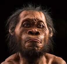 Descoberta de l'homa Naledi