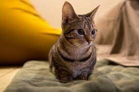 Vaig adoptar el meu gat <3