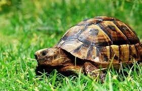 Arriba la tortuga
