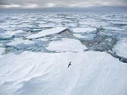 Temperatures record al àrtic