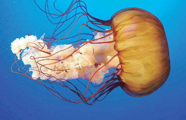 Em pica una medusa per primer cop