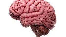 Actividad 1.Donde viene y donde va el cerebro? timeline
