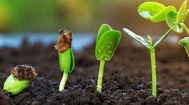 Evolución de las plantas timeline