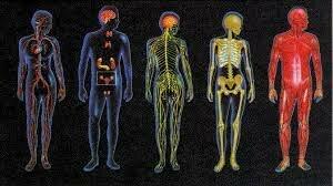 sistemas fisiológicos