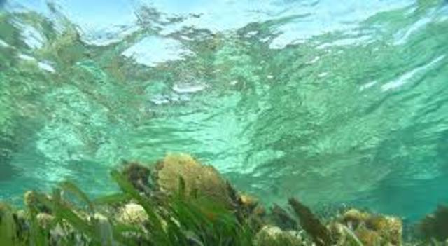 Aparición de las plantas en ambientes acuáticos