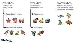 CLASIFICACION DE LOS ANIMALES SEGUN SU ORIGUEN timeline