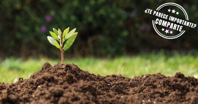 Aparición de las plantas en la tierra