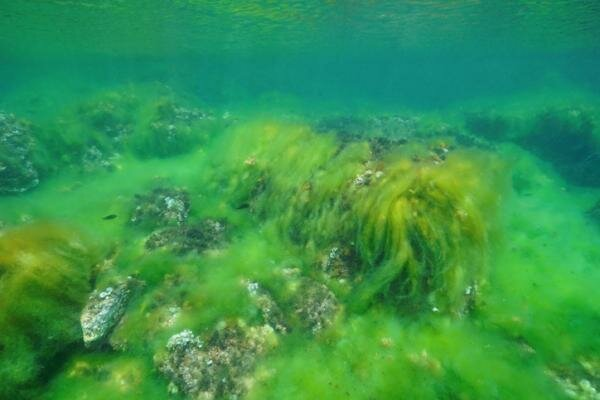 Desarrollo de las algas unicelulares