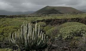 Colonización de las plantas en la tierra