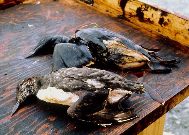 Desastre del Exxon Valdez
