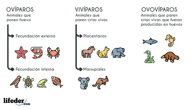 EVOLUCIÒN DE LOS ANIMALES