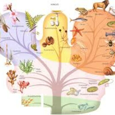 Línea de tiempo sobre la clasificación natural timeline
