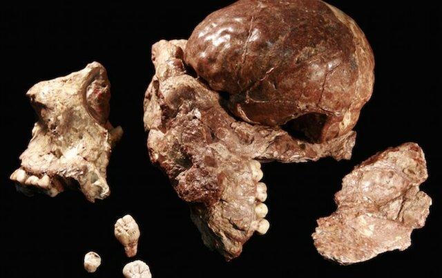 Primeros restos humanos (inicio de la Prehistoria)