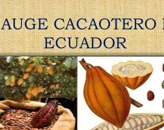 el auge cacaotero