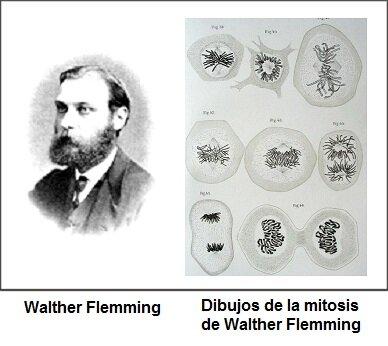 Walter Fleming 1843-1905