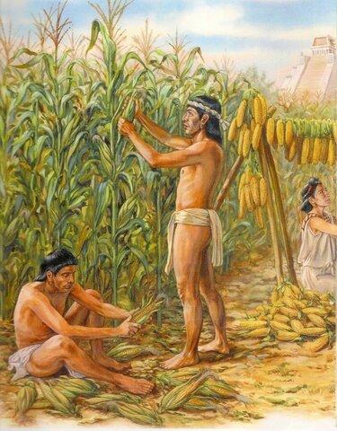 Domesticacion del maíz