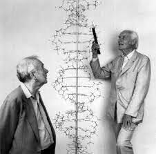 ESTRUCTURA DOBLE HELICE ADN.