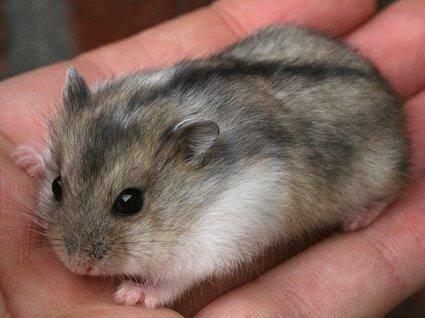 Primera mascota