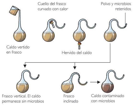 Louis Pasteur realiza sus experimentos en matraces de vidrio con cuello de cisne que demuestran que si los microbios contaminantes se mantienen alejados de un líquido nutriente, el germen no crece.