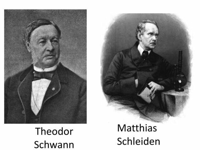 Shwan y Schleiden