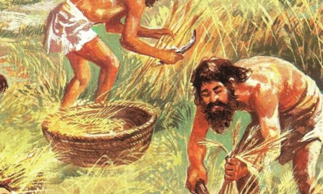 Los primeros cultivos