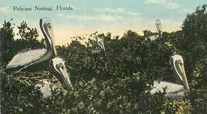 Pelican Island, Florida named first national wildlife refuge