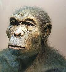 1.9 MILLONES-EVOLUCION CEREBRO HOMINIDOS