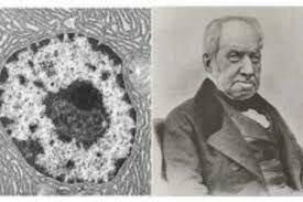 El núcleo celular(1831)