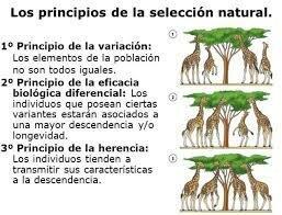 La teoría de la selección natural (1858)